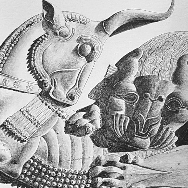 Lion hunting a bull, pencil drawing